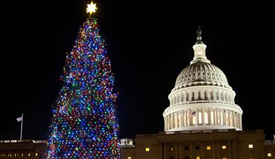 capitol_christmas_tree_20121212_182557